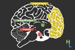 brain-info-thumb